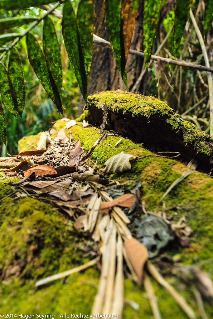 Mossman Gorge Rain Forrest
