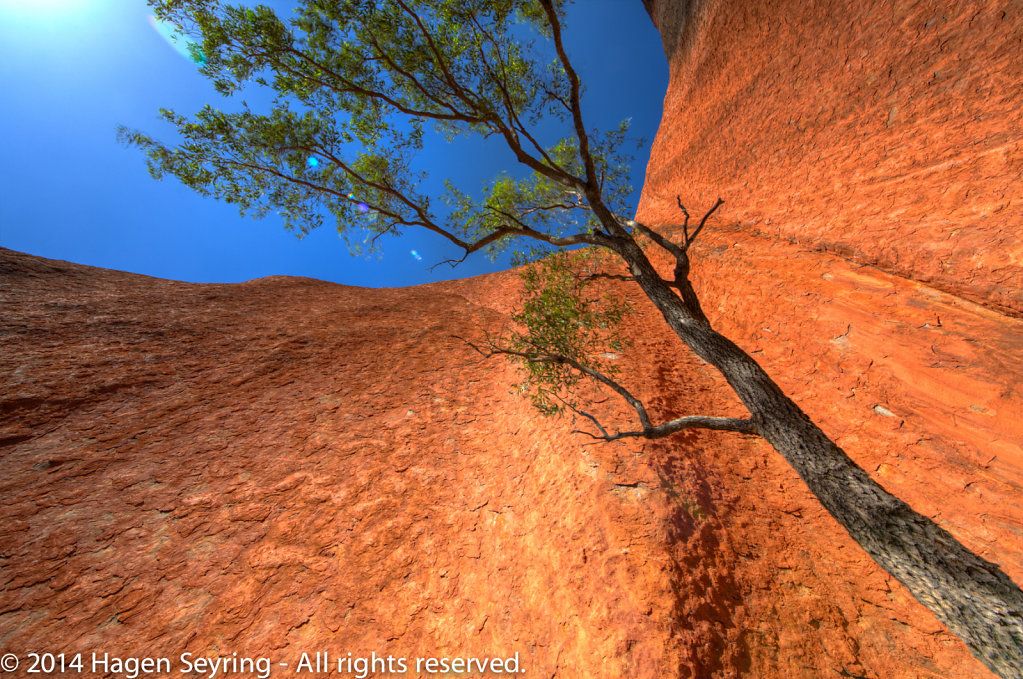 Sandstone formation with a tree