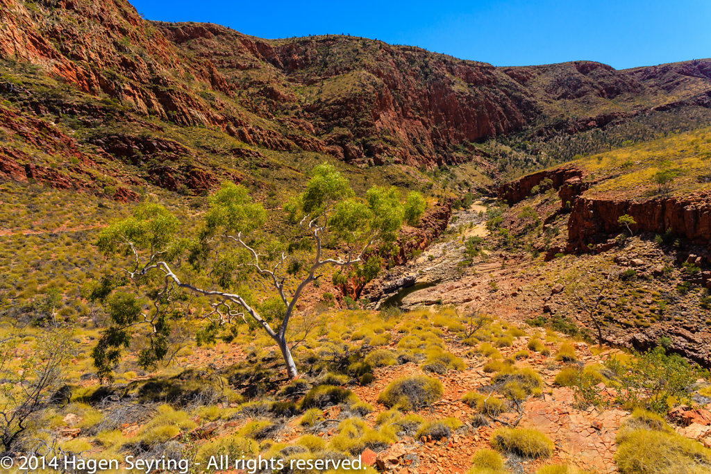 View in the Ormiston Gorge